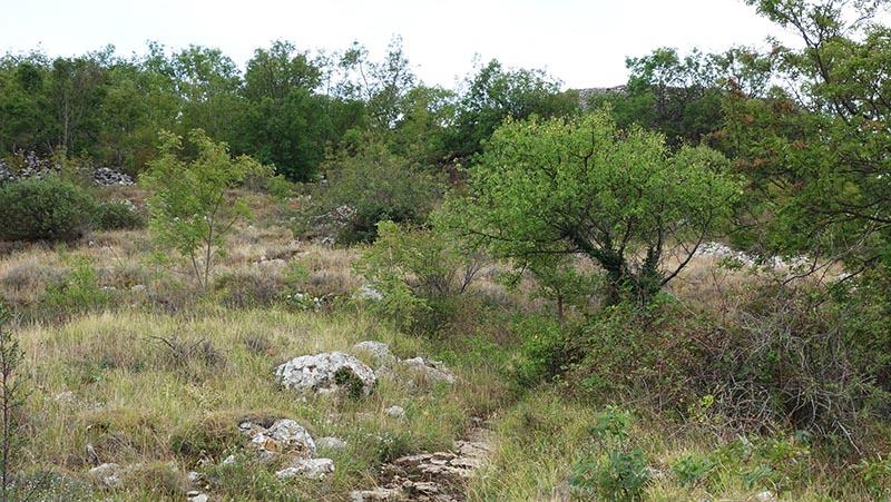 Sentier avant le sommet du baou blanc